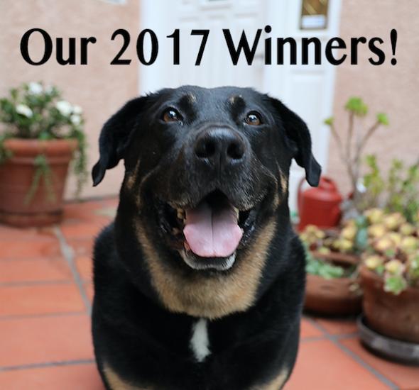 BlueCat's 2017 Winners & Finalists